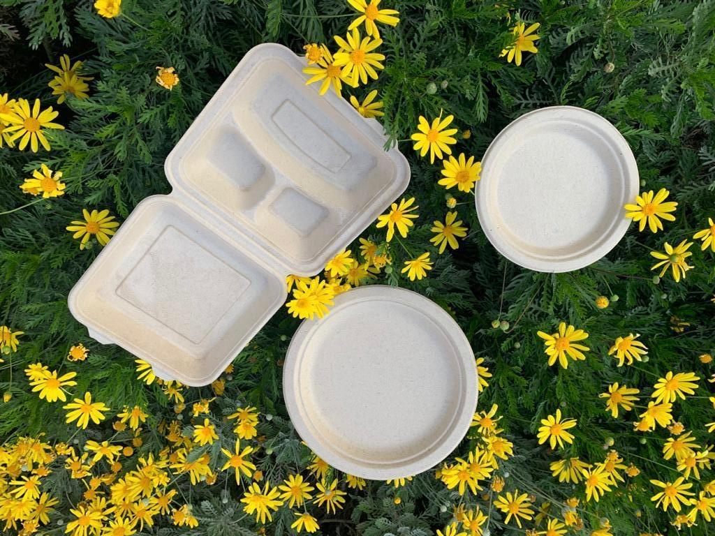 biodegradable food plates